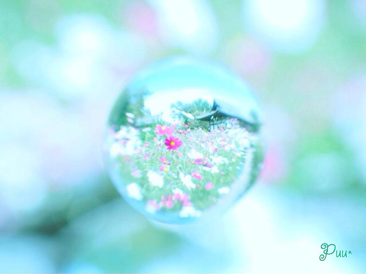 2014年11月いいね!賞Kishi Kazuyoさんの写真です。