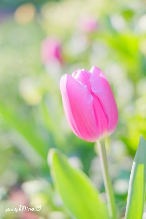 岡田 美濃さんのお写真です。