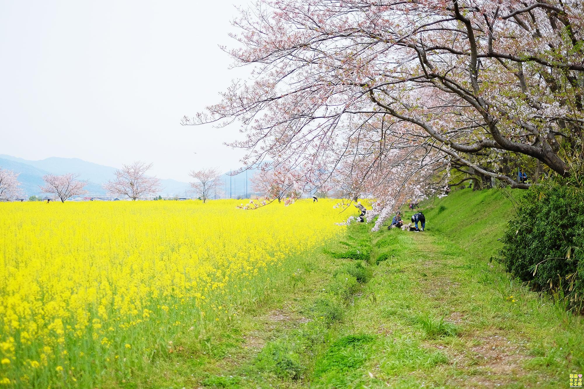 hiro_fujiwara_DSCF1860