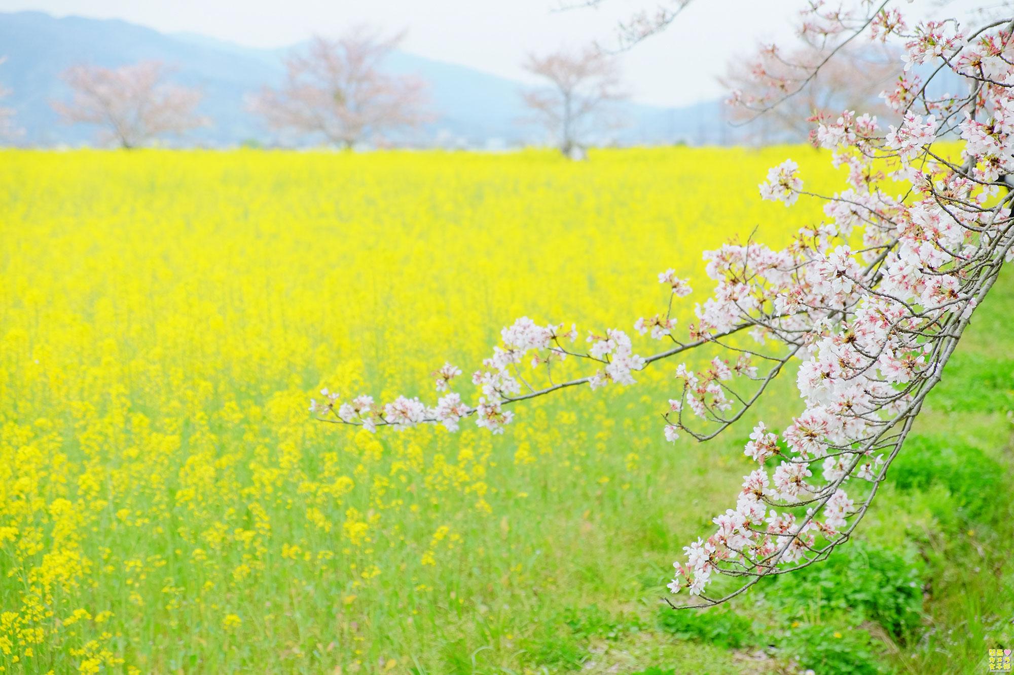 hiro_fujiwara_DSCF1896