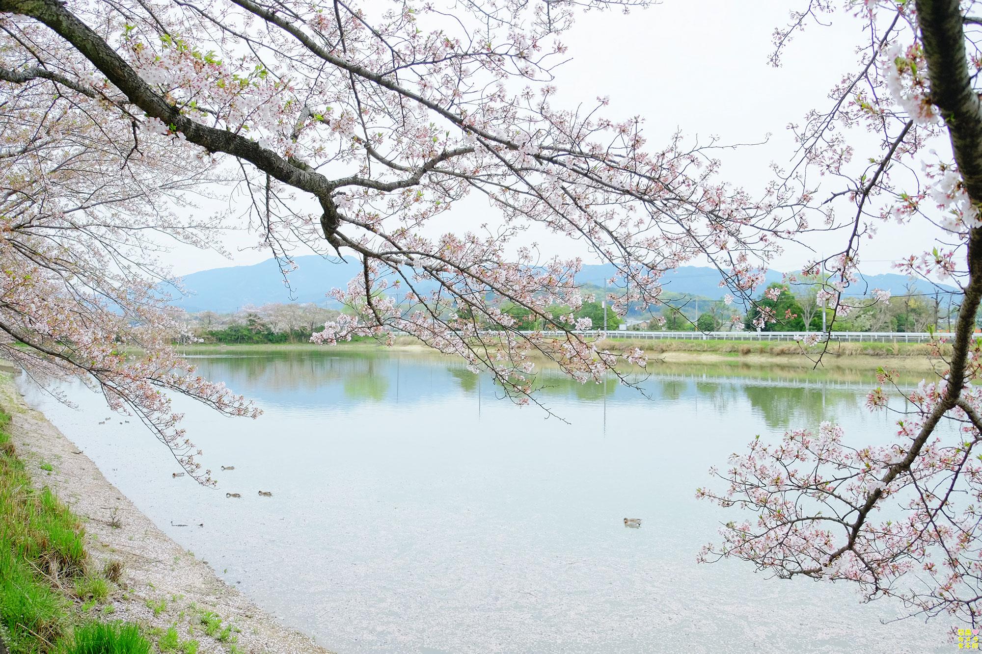 hiro_fujiwara_DSCF1902