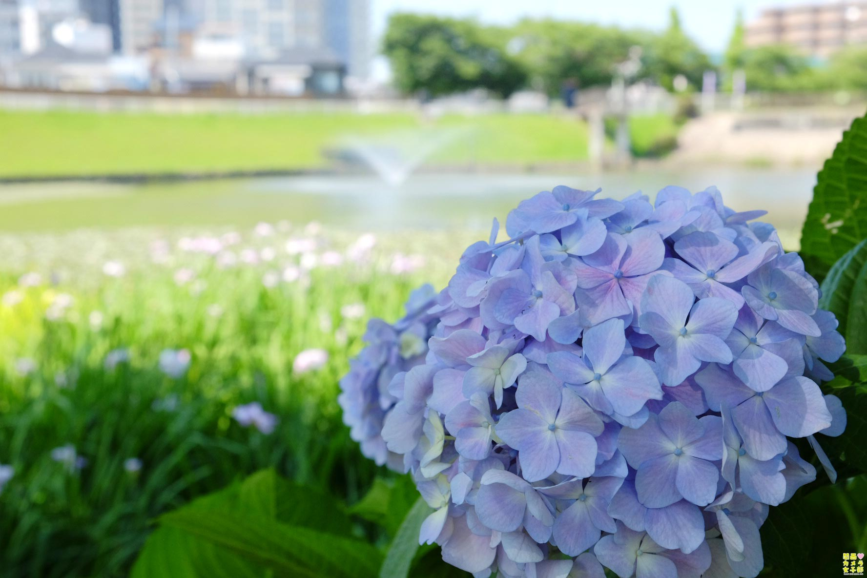 nakada-shirosagipark_IMG_0166