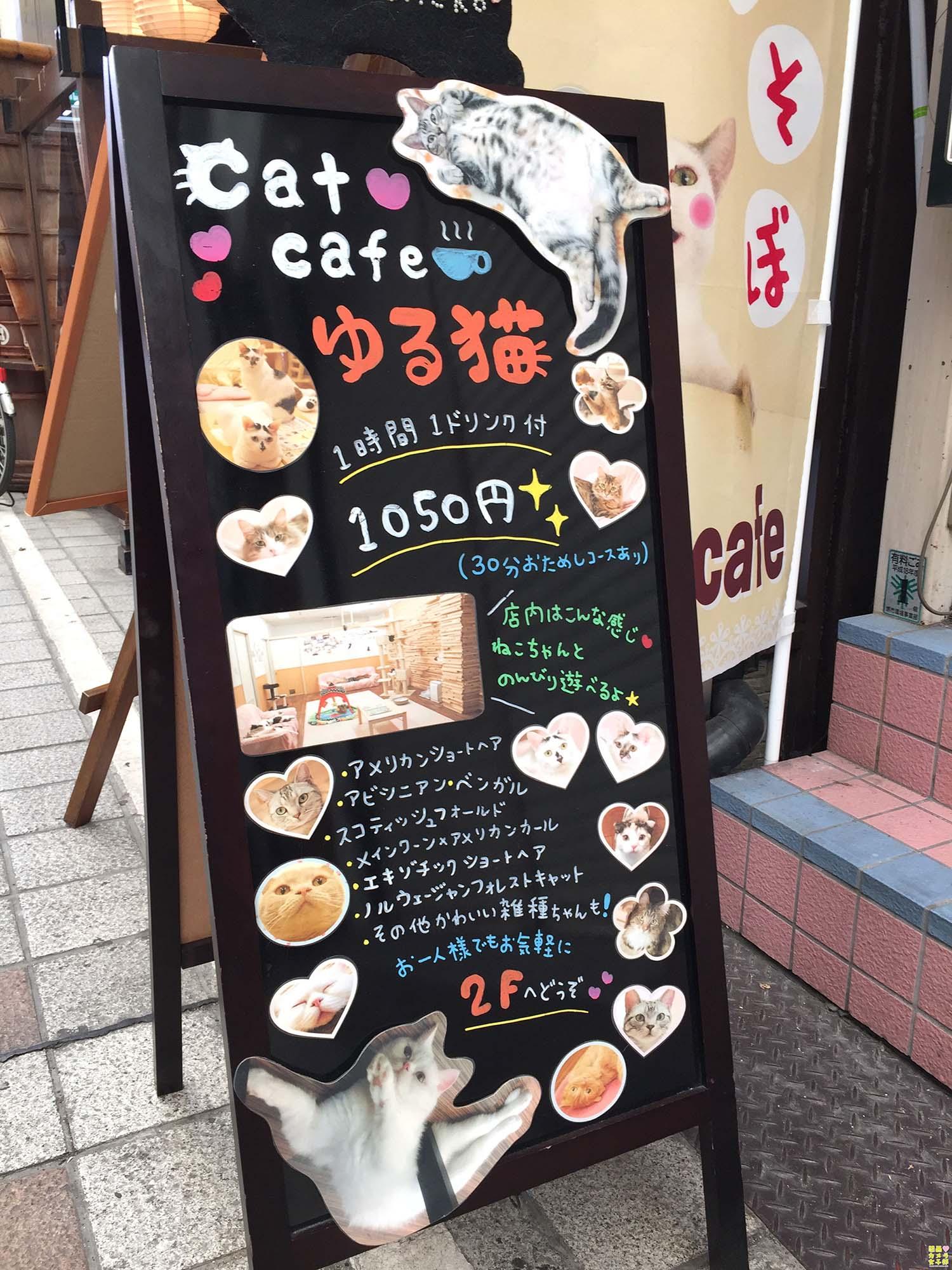 nakata_catcafe_IMG_3069