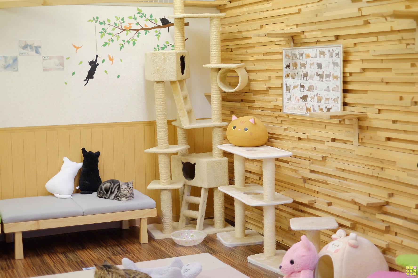 nakata_catcafe_IMG_3076