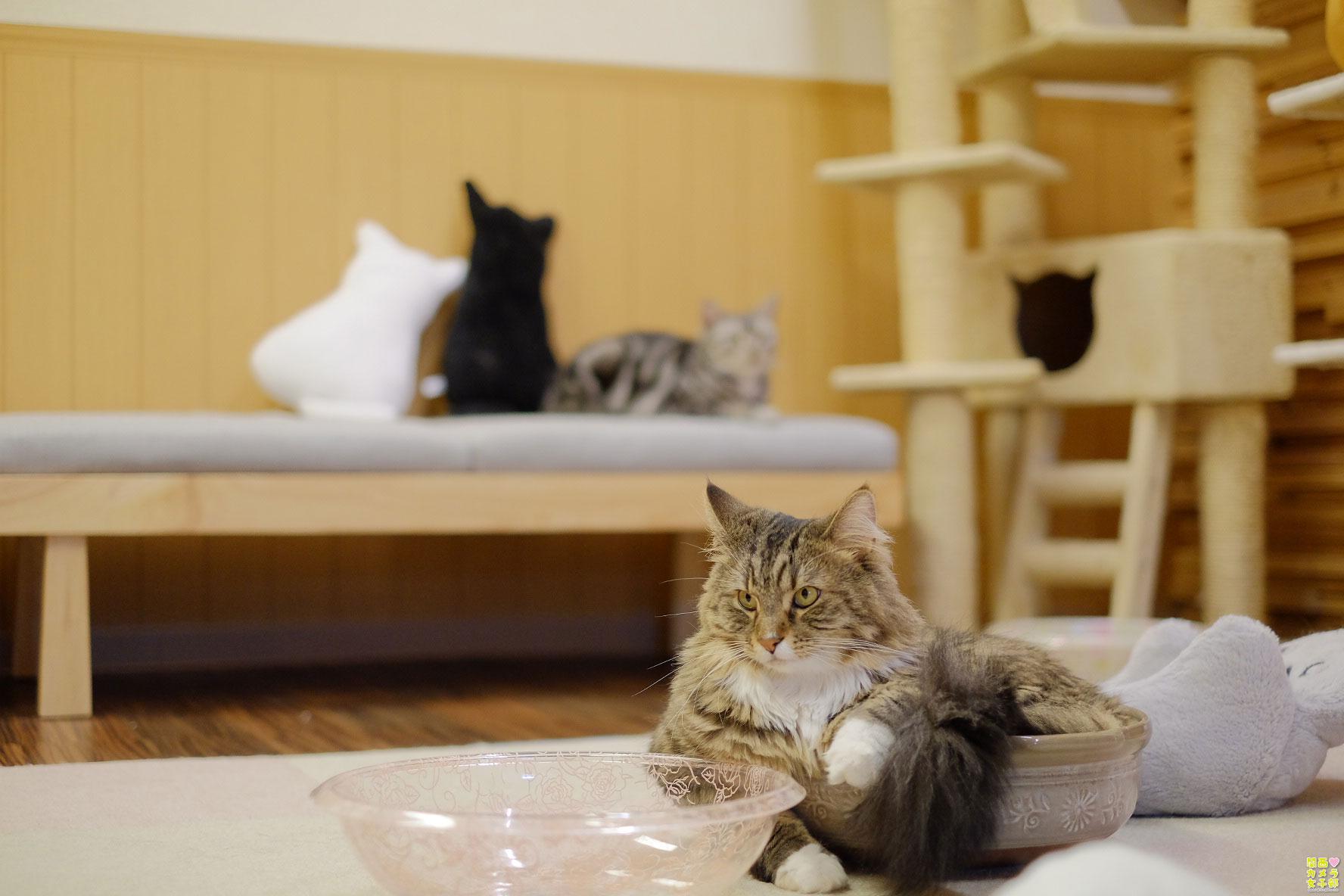 nakata_catcafe_IMG_3104